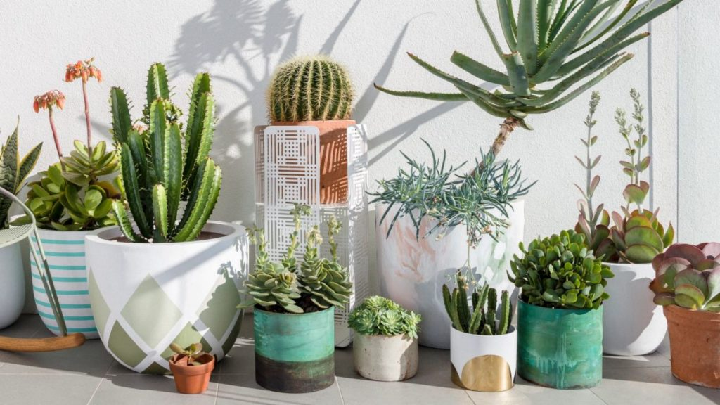 how to grow succulents indoors. Black Bedroom Furniture Sets. Home Design Ideas